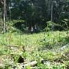 Plantio de árvores promove regeneração de florestas em reserva legal