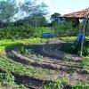 Governo e Ufal se unem para aumentar produção de alimentos