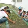 Projeto de Horta Escolar econtribui para o enriquecimento nutricional escolar