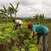 Semana do Alimento Orgânico terá feira organizada pela Secretaria de Agricultura