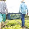 Cooperativas do Agreste recebem incentivo que beneficia 2.500 pessoas