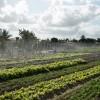 Sedetur implementa modelo de negócios para horticultura