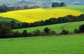 Agronegócio brasileiro deve crescer acima da média mundial, diz Fiesp
