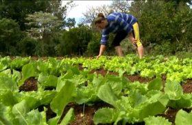PAA 2016 vai beneficiar mais de mil pequenos agricultores de Alagoas