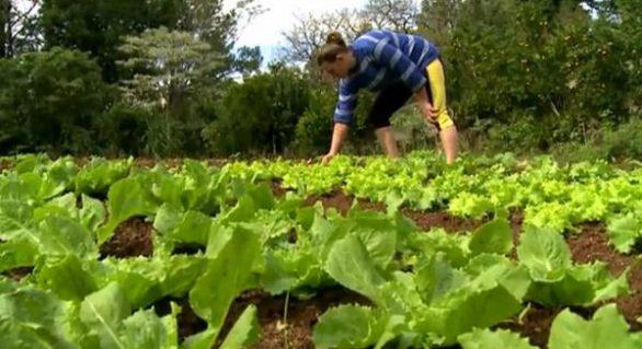 Agricultura familiar gera 77% dos empregos no setor agrícola