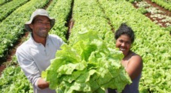 Agricultores parceiros da Semed expõem produtos nesta quarta