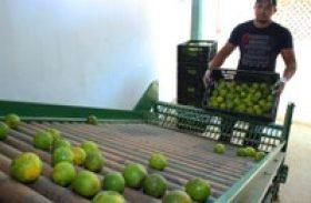Produção de laranja lima em Alagoas é destaque em revista nacional