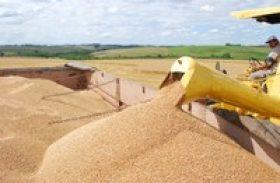 Produtores avaliam safra de trigo em 2013