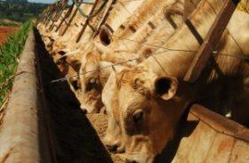 Custos de produção da pecuária têm em alta em janeiro