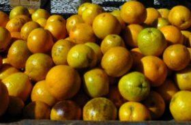 Preço da laranja de mesa começa a subir mais cedo em 2014