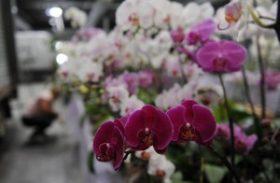 Floricultura brasileira faturou R$ 5,2 bilhões em 2013
