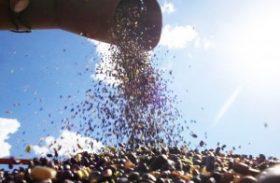 Governo deve comprar 64 mil toneladas de feijão por meio de AGF em fevereiro