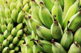 Cultivo de banana ganha força na cidade de União dos Palmares