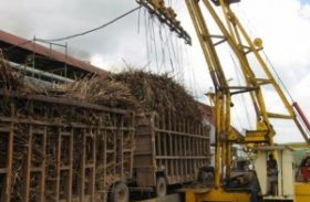 Copersucar reduz previsão da safra de cana-de-açúcar para 570 milhões de toneladas