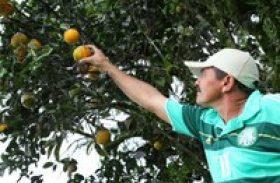 Produtores de laranja lima de Ibateguara aprendem sobre poda