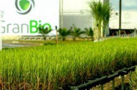 Granbio inaugura em março a fábrica de produção de etanol de segunda geração em Alagoas
