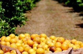 Produção mundial de laranjas deve aumentar 5% em 2013/2014