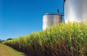 Genética impulsiona produção de etanol de segunda geração
