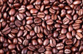 Publicação da Embrapa ensina a produzir café de qualidade com economia de água e redução de custos