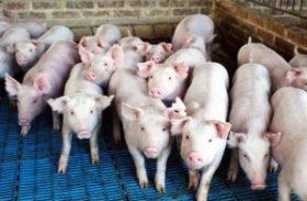 Ministério da Agricultura pode incluir carne suína na política de preços mínimos