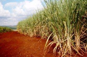 Fevereiro segue com calor intenso e preocupa produtores de cana-de-açúcar