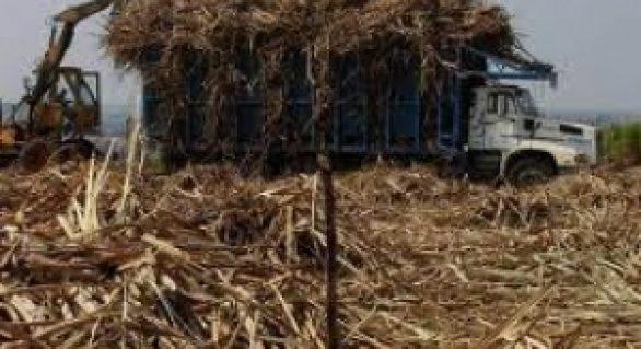 Produção de açúcar na safra 13/14 chega a 1,1 milhão de toneladas