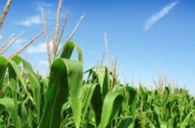Agricultura empresarial contrata R$ 98,2 bi em financiamentos