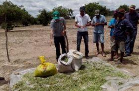 Dia de campo ensina estratégias para que agricultores aprendam a lidar com a seca