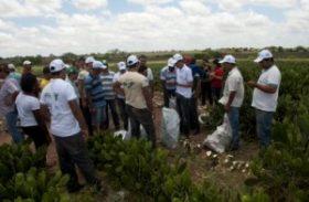 Horticultores de São Sebastião lucram com venda de produtos para a Conab