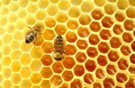 Setor do mel se reúne para recuperar a produção no Nordeste