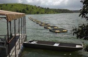 Secretaria da Pesca entrega mais de cinco mil alevinos em Junqueiro