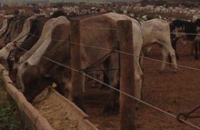 Produção de alimentos para animais deve atingir 67 milhões de toneladas em 2014