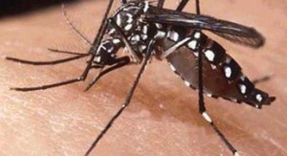 SMS registra casos de doenças causadas pelo Aedes aegypti