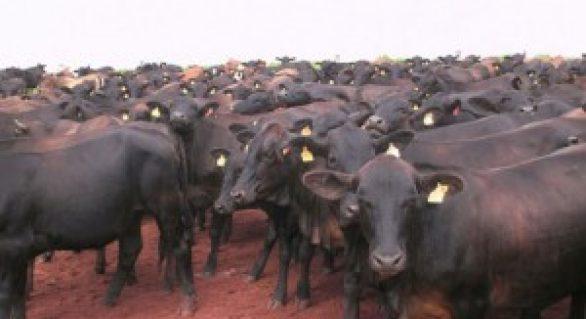 Produção de gado e biocombustível vai aumentar na próxima década