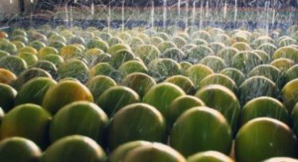 Fábrica de sucos de laranja lima deve ampliar sua produção em 500%