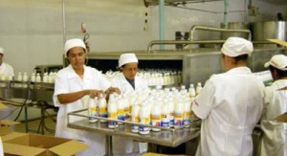 Laticínio da Pindorama reforça incentivo à pecuária leiteira com produtores no agreste