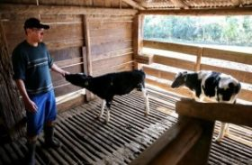 Senado aprova redação final de texto sobre manejo sanitário animal e vegetal