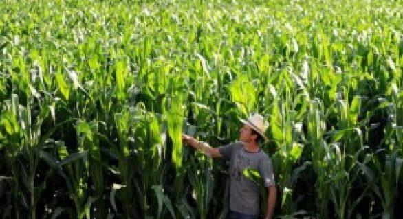 Médios produtores batem recorde de acesso a financiamentos
