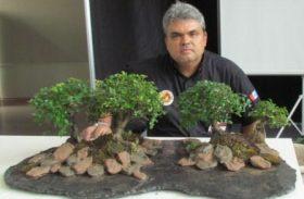 Associação Nordestina de Bonsai preserva flora nativa