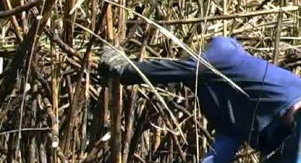 Stab Leste realiza Simpósio da Cana em parceria com Sindaçúcar-AL