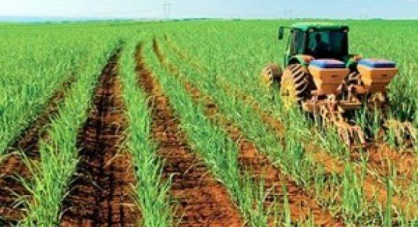 Safra de cana-de-açúcar terá clima como preocupação adicional