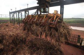 Cana-de-açúcar tem fechamento da safra 2013/14 e primeira estimativa da 2014/15