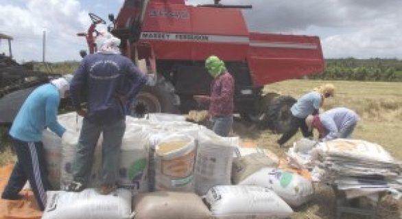 Produção de perímetros irrigados da Codevasf cresce 14% e alcança R$ 1,72 bilhão em 2013