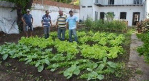 Lar de Nazaré e orgãos municipais recebem hortaliças em Penedo