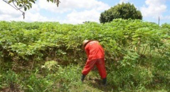 Horta do sistema prisional produz cerca de três toneladas de alimentos