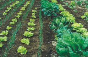 Fundação BB financia projetos agroecológicos de povos tradicionais e assentados