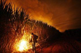 ALE discute impacto do fim da queima da cana no trabalho rural