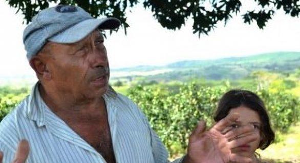 Agricultor aposta na produção de laranja em área de pecuária de leite