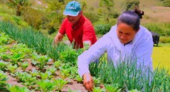 Programa Microcrédito Orientado aplica mais de R$ 40 milhões em AL
