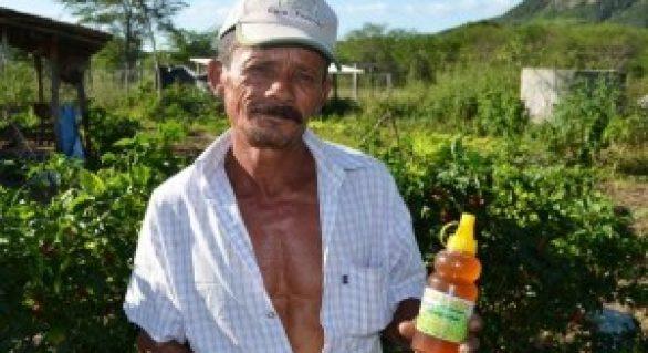 Agricultura familiar muda a vida de produtores no Sertão